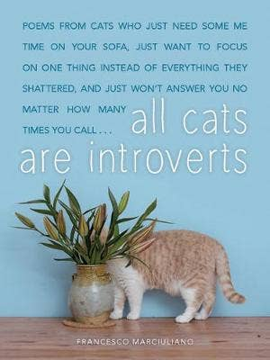 All Cats Are Introverts
